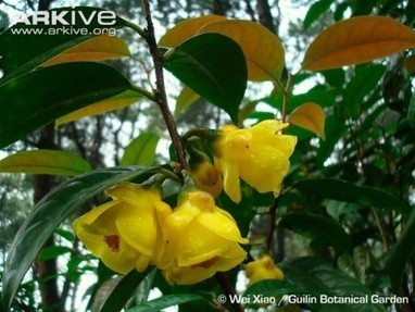 A valentine for a crop wild relative | Agricultural Biodiversity | Scoop.it