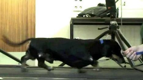 BBC Brasil - Vídeos e Fotos - Transplante de célula de focinho faz cão voltar a andar   Meu Acre, Ciências, Brasil, Artes e Borboletas   Scoop.it