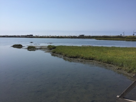 Fund for maintaining Bolsa Chica wetlands is running out of money | Coastal Restoration | Scoop.it
