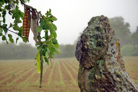 Arbres à loques : remèdes celtiques - lavenir.net | Mégalithismes | Scoop.it