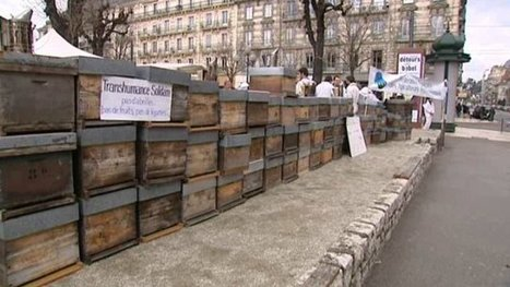La transhumance solidaire d'essaims d'abeilles passe par Grenoble – apiculture - France 3 Alpes | Abeilles, intoxications et informations | Scoop.it