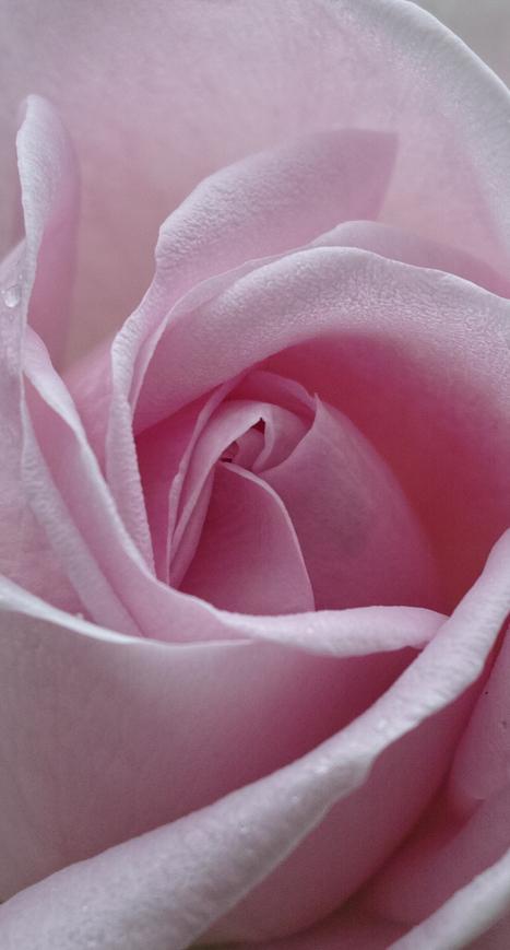 sigma dp2 merrill - a photographer´s garden | Best Quality Mirrorless Cameras | Scoop.it
