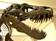 Dinosaur Cells In T. Rex Fossil?  New Scientific Support | Offshore Stock Broker News | Scoop.it