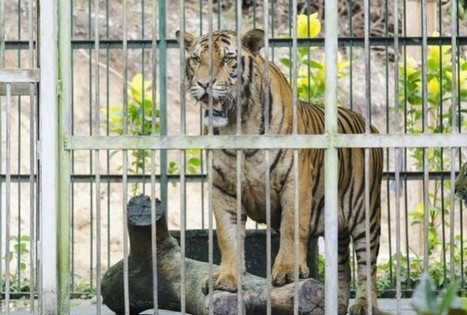 Louisiana's Captive Animals Need Your Help Now | Nature Animals humankind | Scoop.it