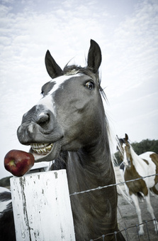 Horse with an Apple | Design & Marketing | Scoop.it