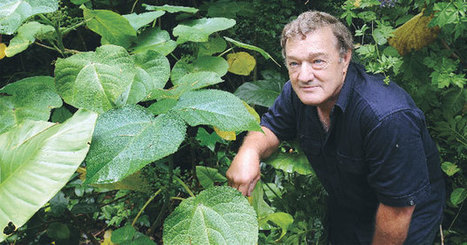 Gympie Gympie: Once stung, never forgotten | Australian Plants on the Web | Scoop.it