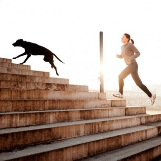 The Ultimate Guide to Running With Your Dog | The Dog Connection TV | Scoop.it