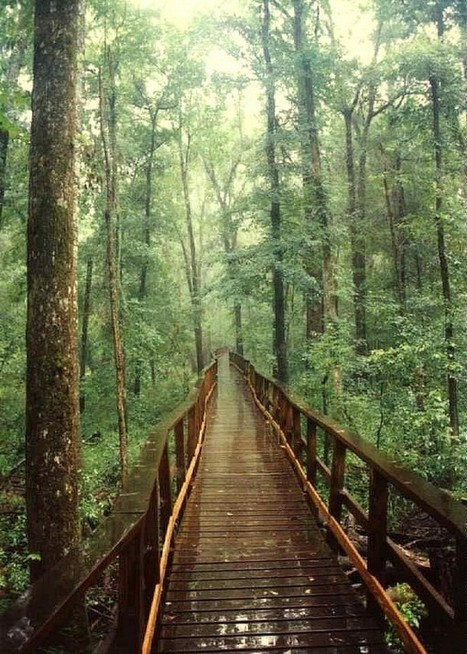 The 58 National Parks in the USA(*13): Congaree National Park - Tourism on the Edge | Motorhome Madness | Scoop.it