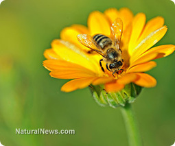 The story of honeybees and their importance in sustaining life | Healing our planet | Scoop.it
