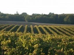 Un vignoble protégé   Le Vin et + encore   Scoop.it