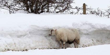 La neige de printemps décime les agneaux au Royaume-Uni | High tech & Design | Scoop.it