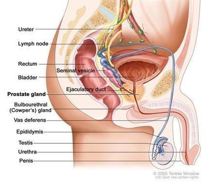 Natural Cure for Prostate Cancer – Curing the Cause | Prostate Health- Advances, Knowledge, Integrative & Holistic Treatments | Scoop.it