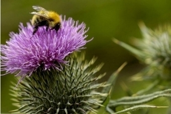 Scottish Government fails to ban pesticide blamed for poisoning bees | Food issues | Scoop.it