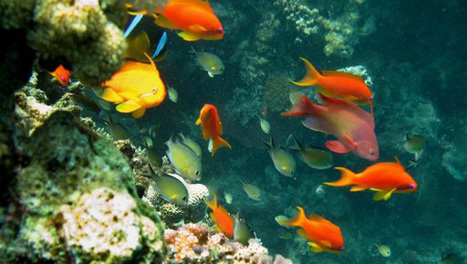 Marine reserves boost fish   In Deep Water   Scoop.it