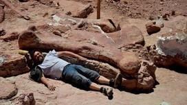 Encuentran restos de un titanosaurio, el animal prehistórico más grande hallado - El Diario | Mitología clásica | Scoop.it