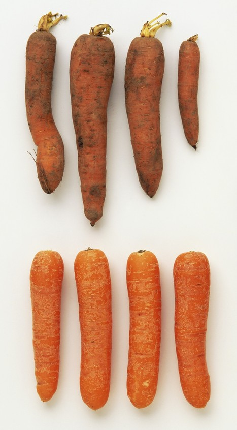 Do Looks Matter? Report Shows 40% Of Fruit And Vegetables Wasted, Because ... - Huffington Post UK | Why It's Okay To Eat Ugly Vegetables | Scoop.it