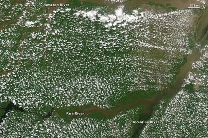 NASA study shows 13-year record of drying Amazon caused vegetation declines | Sustain Our Earth | Scoop.it