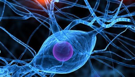 Les outils numériques de l'apprentissage - Sciences cognitives | Éducation, TICE, culture libre | Scoop.it