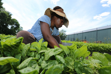 Boston hopes to plant seed for commercial agriculture to flourish - Boston Globe | urban entrepreneurs | Scoop.it