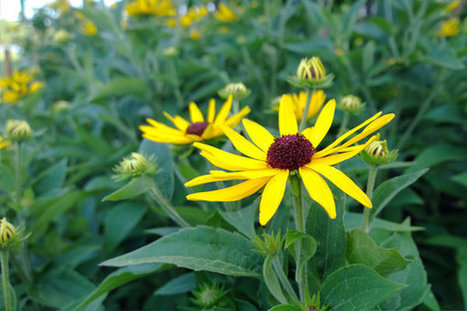 The Lumia 1020, a Great Camera Grafted to an Oddball Phone | Sustain Our Earth | Scoop.it
