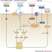 Translation inhibition and metabolic stress pathways in the host response to bacterial pathogens : Nature Reviews Microbiology : Nature Publishing Group | Urban microbiome | Scoop.it