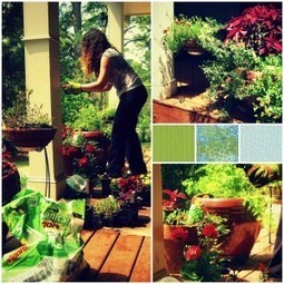 Self Contained: A Little Philosophy of Container Gardening | Gardening | Scoop.it