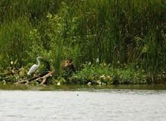 American Rivers | Improvements for the Potomac River: River Health ... | Fish Habitat | Scoop.it