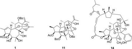 Anti-HIV active daphnane diterpenoids from Trigonostemon thyrsoideum | CHEMISTRY NEWS | Scoop.it
