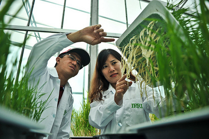 Largest-ever philanthropic investment into budding rice scientists | Innovations Meeting June | Knowledge Management JHUCCP | Scoop.it