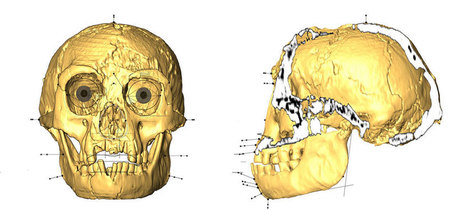 Look into the face of Homo floresiensis | Clever stuff | Scoop.it