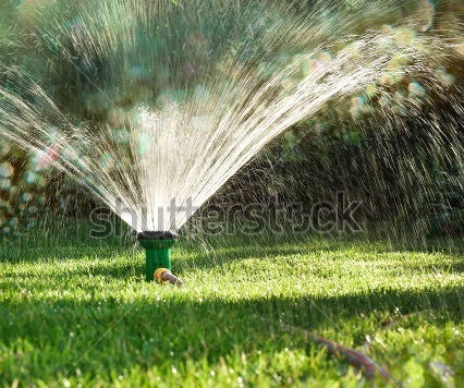 Water saving tips for your garden !! | Lawn Turf Suppliers | Scoop.it