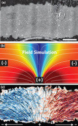 'Herding' cells with direct electric current may aid in tissue engineering   Electrical Engineering   Scoop.it