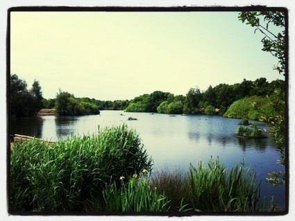Walks And Walking - Epping Forest The Hornbeam Trail Walking Route | Walks And Walking | Scoop.it