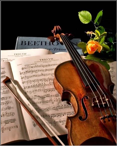 Violins - a beautiful photo galery | Violins | Scoop.it