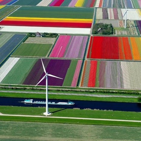 Aerial Photographs of Tulip Fields in the Netherlands, by Normann Szkop | 1001 Creative ideas ! | Scoop.it