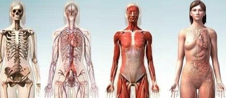 Las TIC y su utilización en la educación : 10 apps para recorrer a detalle el cuerpo humano en 3D | Recull diari | Scoop.it