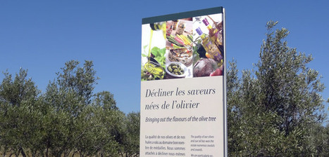 L'huile d'olive confirme ses bienfaits pour la santé   Huileolive   Scoop.it