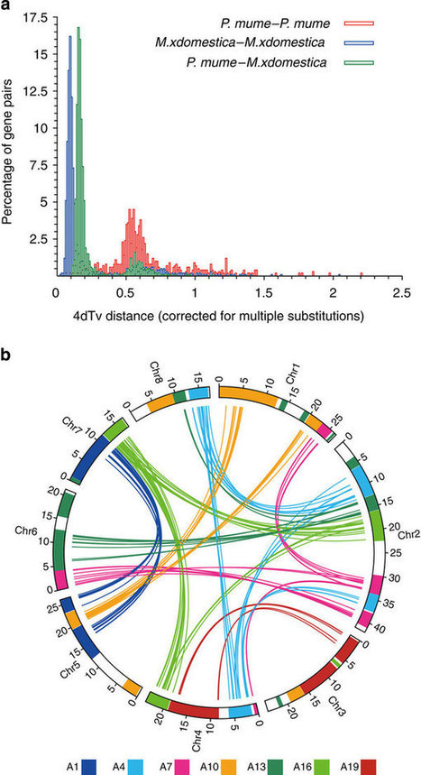 The genome of Prunus mume : Nature Communications : Nature Publishing Group | Plant Genomics | Scoop.it