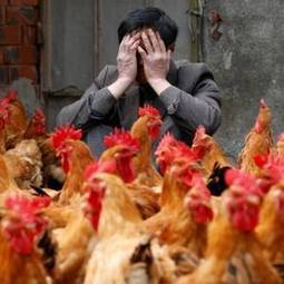 New China H7N9 bird flu cases 'signal potential winter epidemic' - Independent.ie   Pandemic (flu focus)   Scoop.it