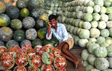 Monsanto Slammed for Violating European Patent Law for GMO Melon | OrganicNews | Scoop.it