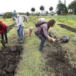 """""""Occupy the Farm"""" coalition takes over land tract near Berkeley to feed local community 