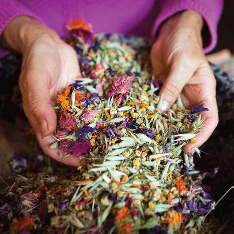 Herbal Antibiotics: An Effective Defense Against Drug-Resistant 'Superbugs' - Natural Heath - MOTHER EARTH NEWS | Better Health | Scoop.it
