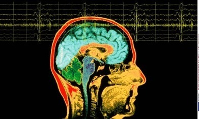 The brain… it makes you think. Doesn't it? | Neuroscience for Regular Folk | Scoop.it