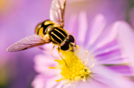 Insecticides (Not Parasites) Linked to Honeybee Deaths | Food for Pets | Scoop.it