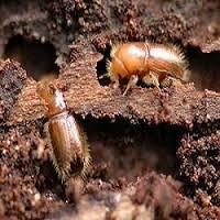 Pest control in Manesar | Pest Control Services Delhi NCR | Scoop.it