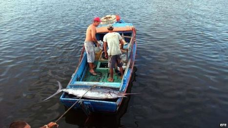 Revolutionary Apartheid: Illegal fishing on the rise in Cuba | Babalú Blog | Commercial fishing - legal issues | Scoop.it