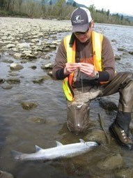 Power Lines » City Light Awarded Grant to Acquire Key Fish Habitat ... | Fish Habitat | Scoop.it