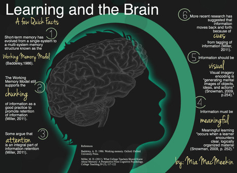 Learning and the Brain- A few quick facts | SteveB's Social Learning Scoop | Scoop.it