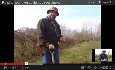 Root Stock Propagation | Local Food Systems | Scoop.it
