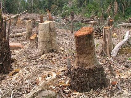 Aumenta la deforestación: el 90% de los bosques, en peligro   Noticias de ecologia y medio ambiente   ecologia   Scoop.it